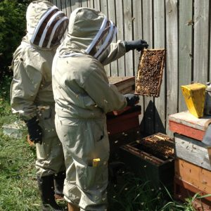Bee Keeping Course Yorkshire